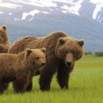 What to Do on an Alaska Adventure Travel